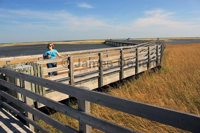 Boardwalk and Marsh Grass