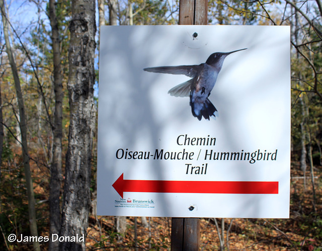 Hummingbird Sign