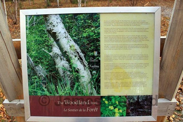 Woodland Trail Sign