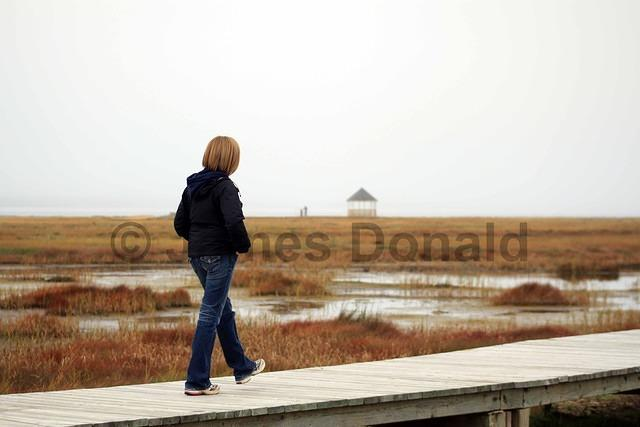Boardwalk and Marsh