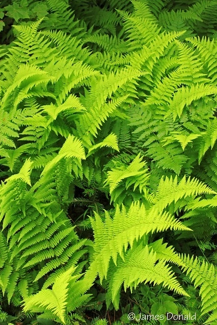 Thick Ferns