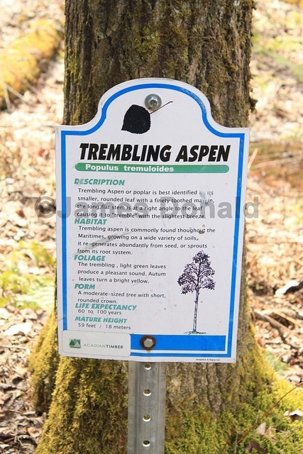 Trembling Aspen Sign