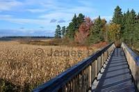 Fall Colors along the Boardwalk
