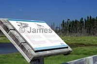 Osprey Interpretive Sign