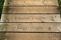 Life without Sugar Maple