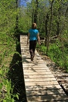 Trail Boardwalk