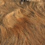 Grass Waves