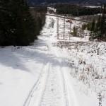 Sapin Baumier Trail