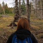 Lumpy Spruce