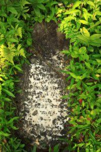 Martin Head Grave