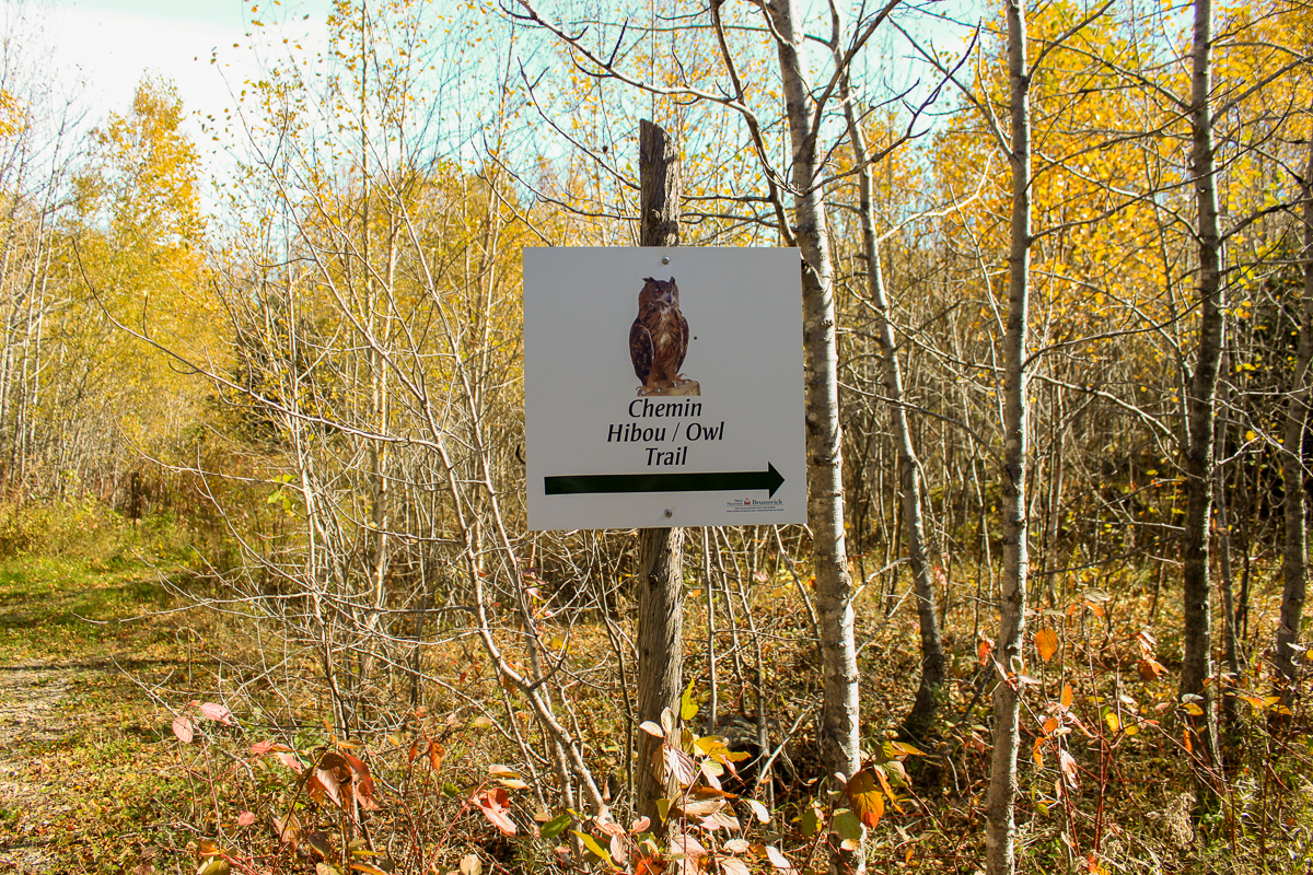 Owl trail sign